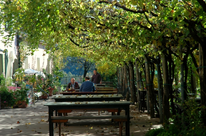 A vineyard cover the tables of the Osteria da Brun