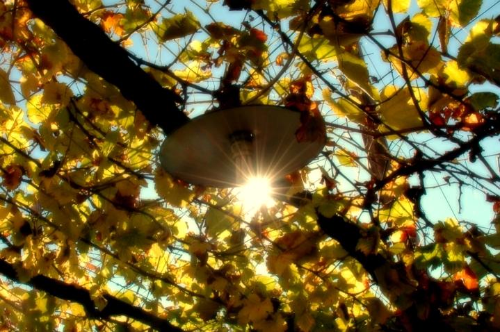 the autumn sun is still shining