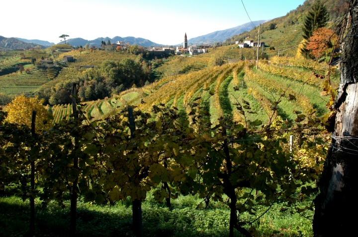 prosecco DOCG vineyards in Rolle
