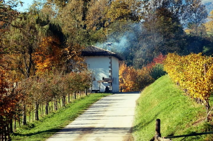 prosecco DOCG vineyards in Feletto Conegliano
