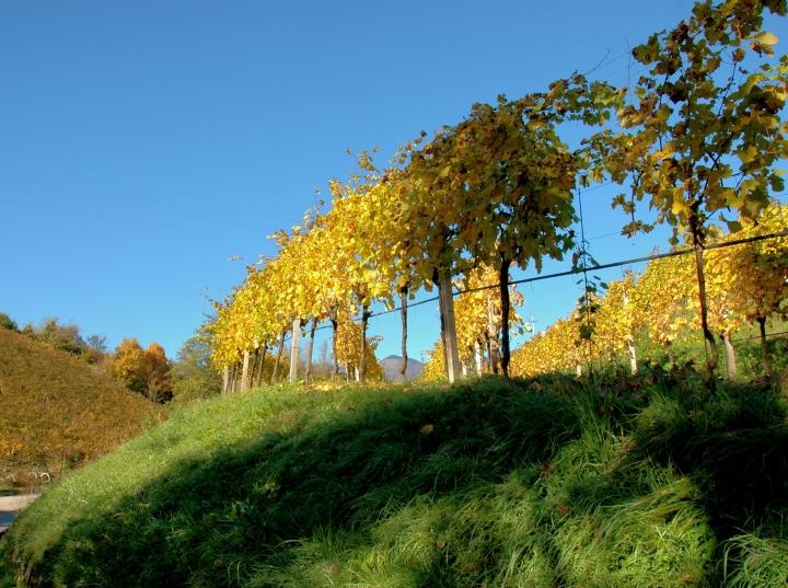 prosecco DOCG vineyards