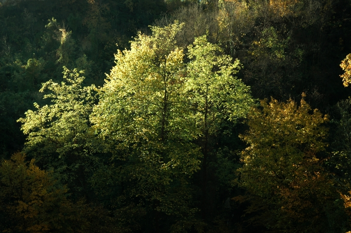 A tree shines within the dark forest